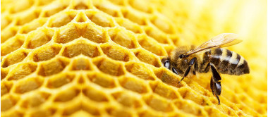 Abelhas e imunidade: elas fazem mais que mel