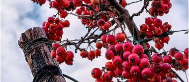 7 razões para usar vinagre de maçã